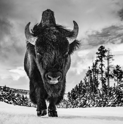 David Yarrow - American Idol