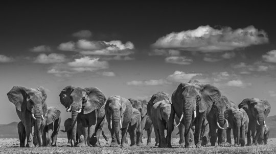 David Yarrow Galeria Madrid