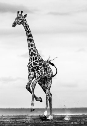 David Yarrow - Hoof it