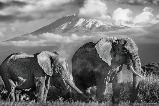 David Yarrow - Kilimanjaro