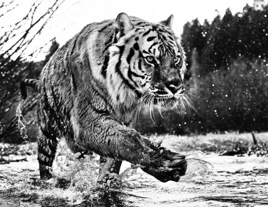 David Yarrow - Mystic River