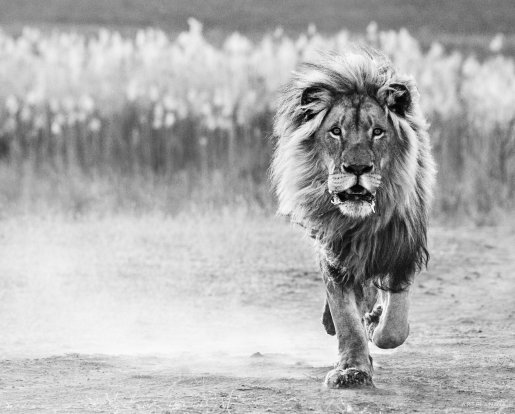 David Yarrow - One Foot on the ground
