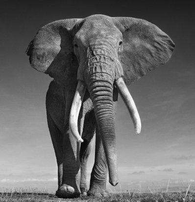 David Yarrow Fotografías de Elefantes en venta