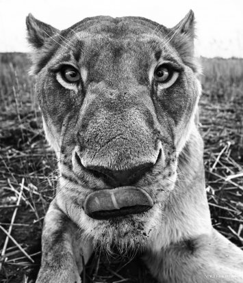 David Yarrow - The Hunger Games