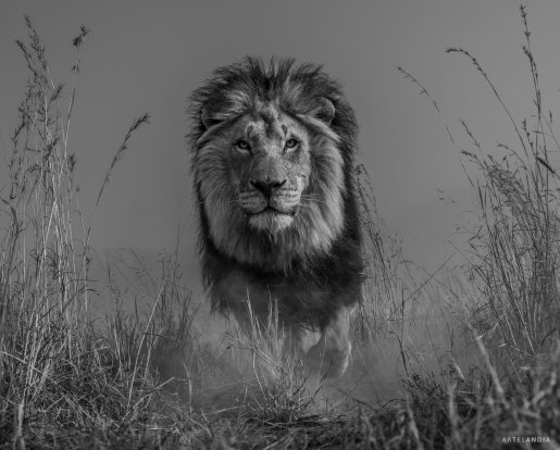 David Yarrow Fotografia Salvaje