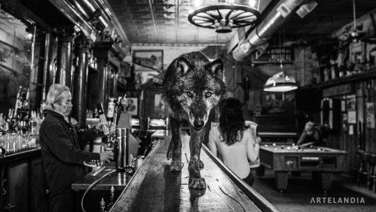 David Yarrow - The Wolf of Main Street