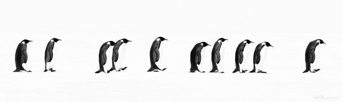 David Yarrow Antartida