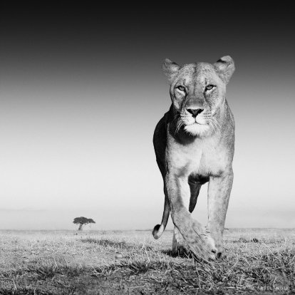 David Yarrow Galeria de Arte Madrid